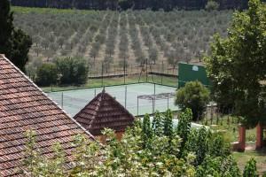 olive-grove-24-1024x683